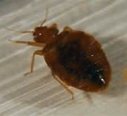 BED BUGS CAN BE CONTROLLED EASILY