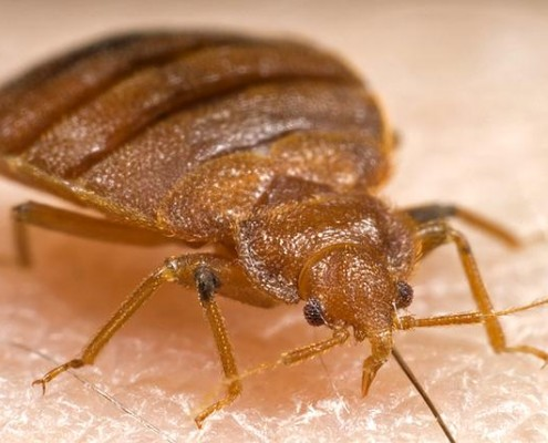DON'T LET BED BUGS CATCH YOU NAPPING
