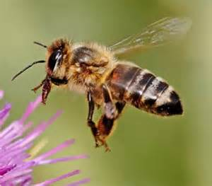 BEES ARE BENEFICIAL EXCEPT WHEN THEY ARE IN YOUR HOUSE