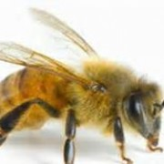 BEES CAN BE A STINGER