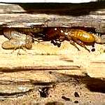 TERMITES CAN COST YOU $$$$$$